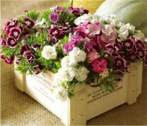 Flores Naturais de Vaso