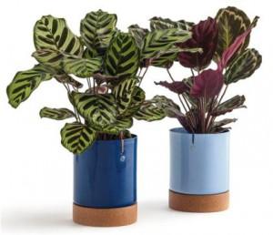 Imagem de Plantas Ornamentais
