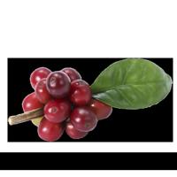 Imagem do menu para Café