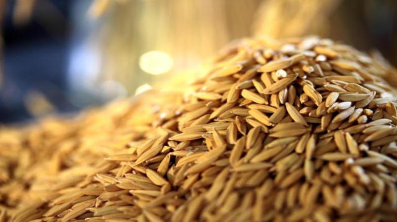 EUA puxam exportações brasileiras de arroz