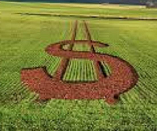 PIB do agro acumula alta de 8,48% em 2020