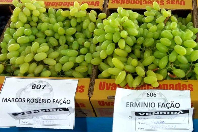 Imagem de Clientes produzindo uvas <br />'sem sementes' com BioSoil